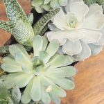 Amazing-Tipis-Plants