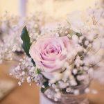 Amazing-Tipis-Roses